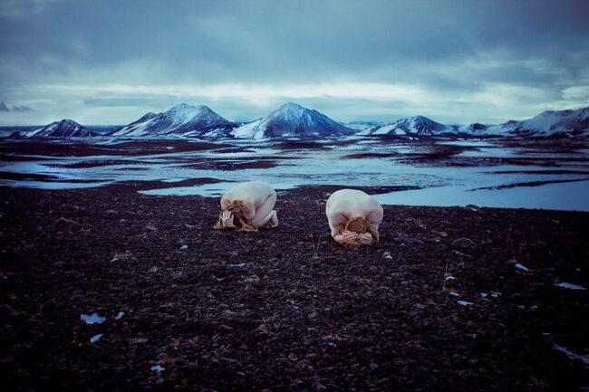 Zwei nackte Menschen kauern in einer Winterlandschaft