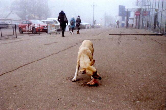 Hund auf einer Straße frisst Fleisch
