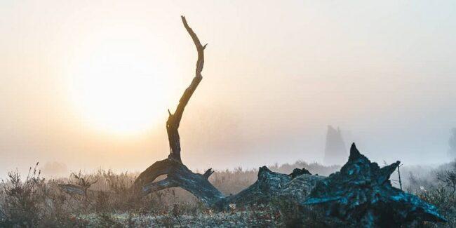 liegender Baumstamm ragt in Morgendunst auf