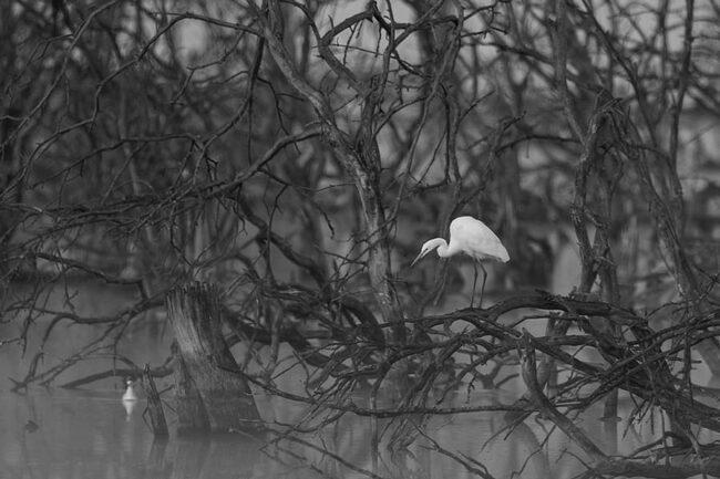 weißer Vogel in dunklem Geäst