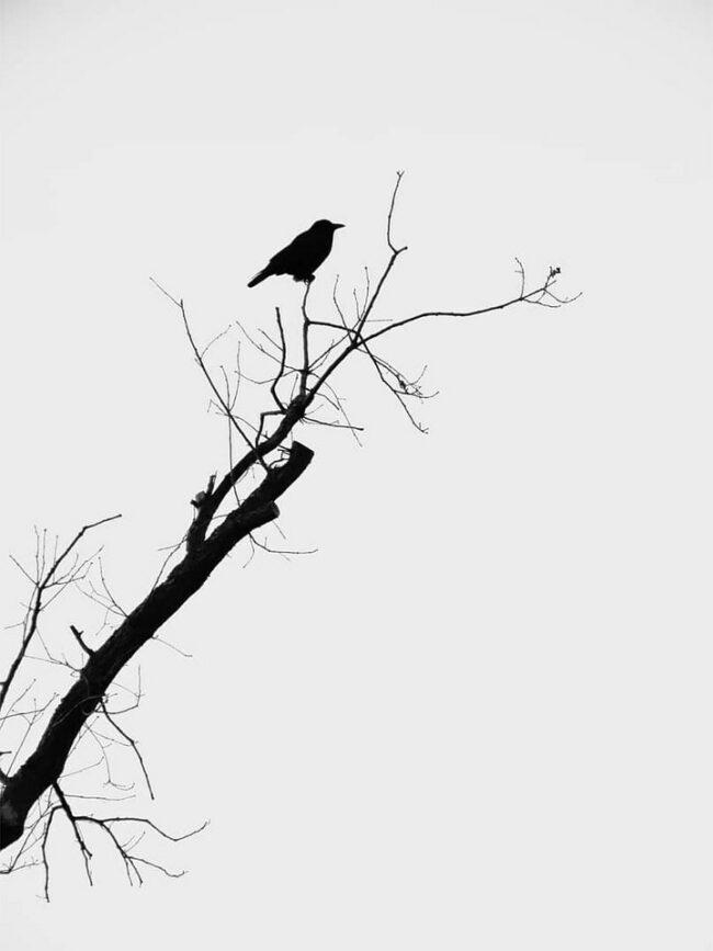 Vogel im Geäst