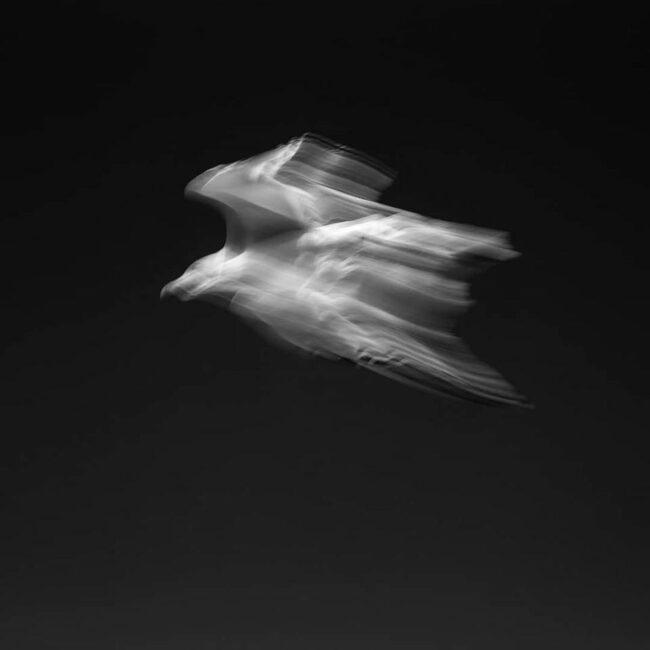 verwischter Vogel im Flug
