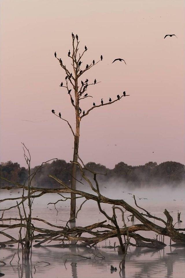 Vogelschwarm auf einem Baumskelett