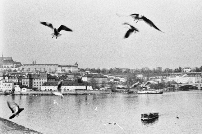 Möwen über einer Stadt am Wasser