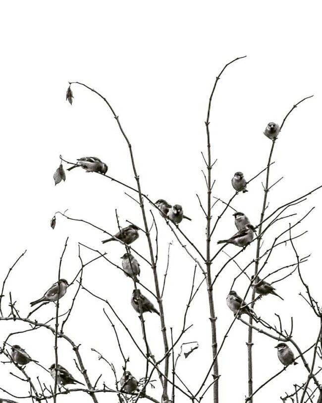 Vogelschwarm im Geäst