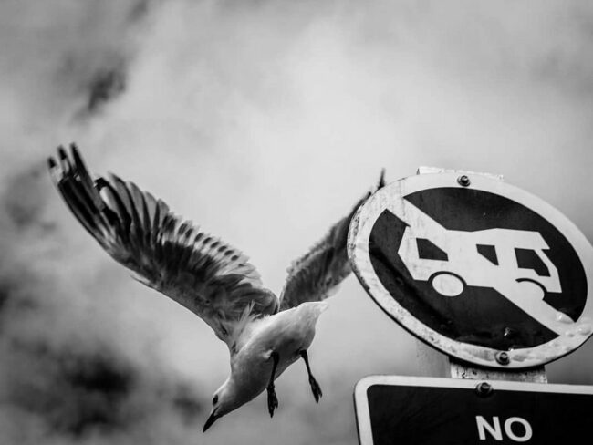 Möwe fliegt von einem Schild aus los
