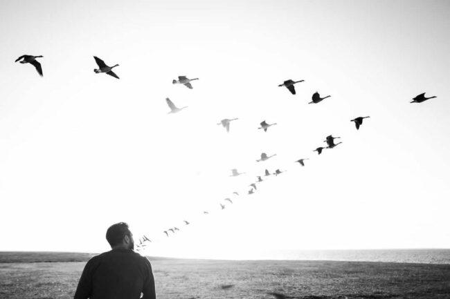 Mann am Strand sieht den Gänsen nach
