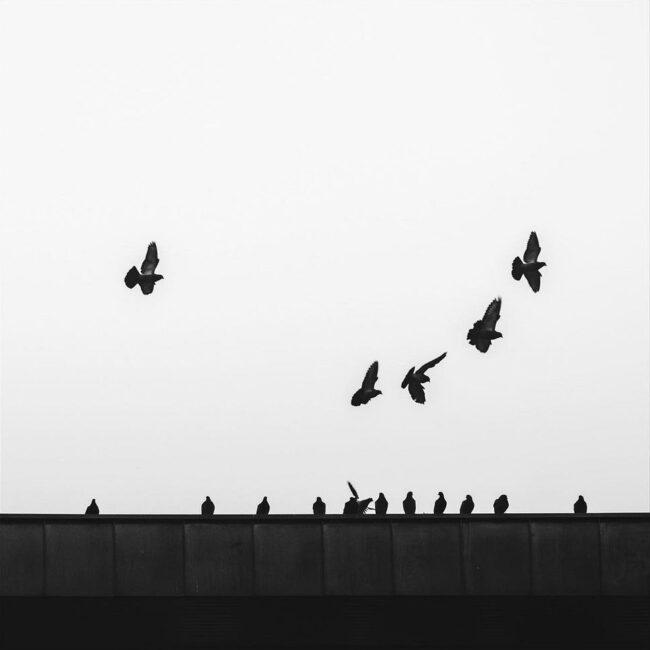Vogelschwarm auf einem Dachfirst