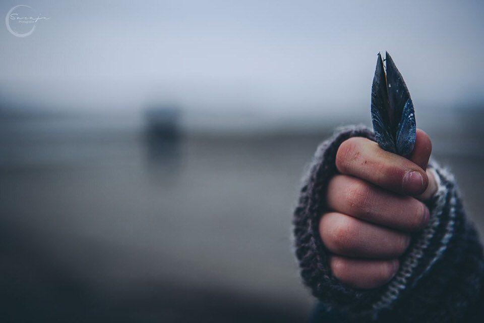 Hand hält Muschel