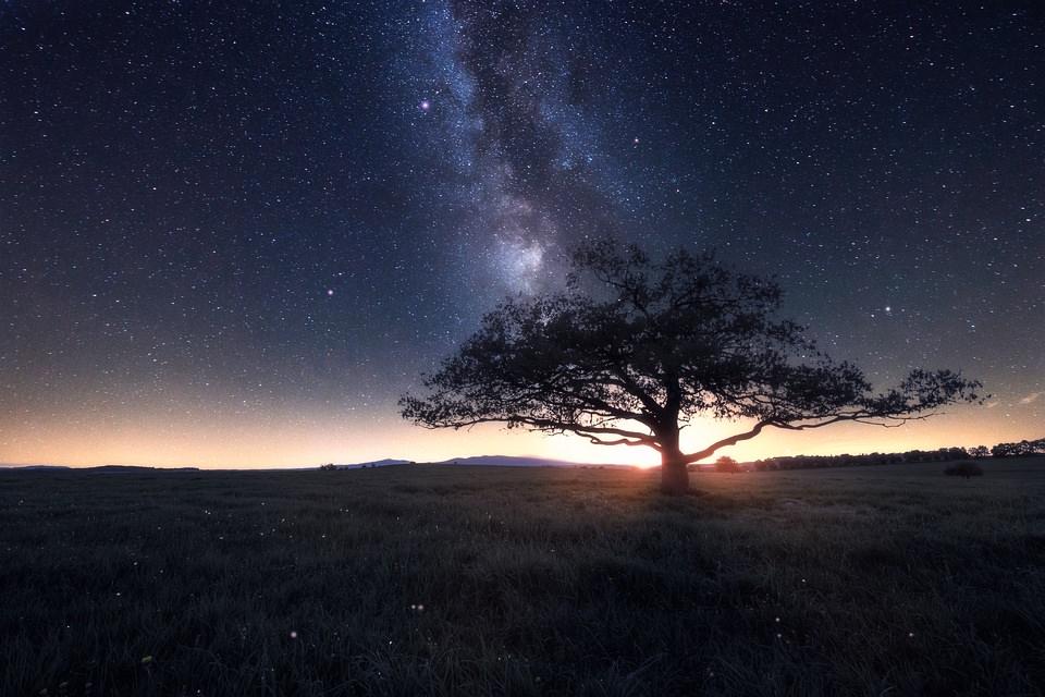 Milchstraße über einem einsamen Baum