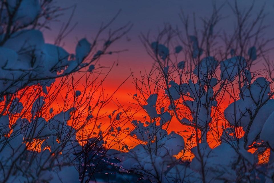 Schnee auf Ästen vor rotem Himmel