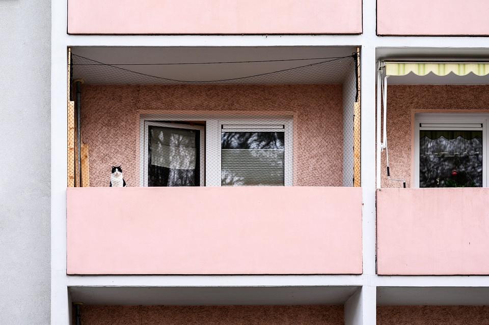 Katze auf einem Balkon