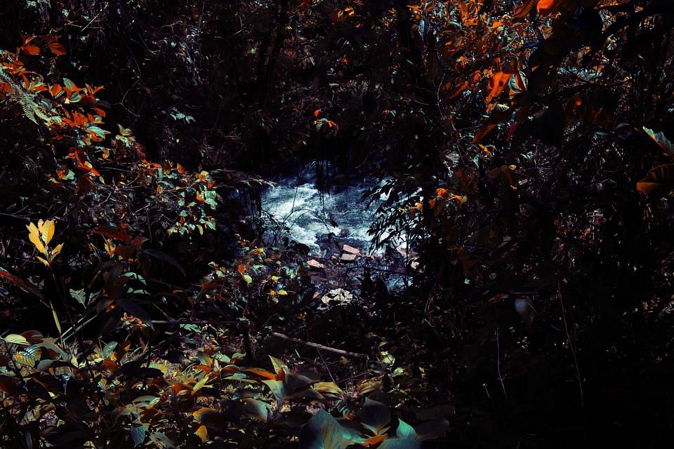 Fluss und Gebüsch