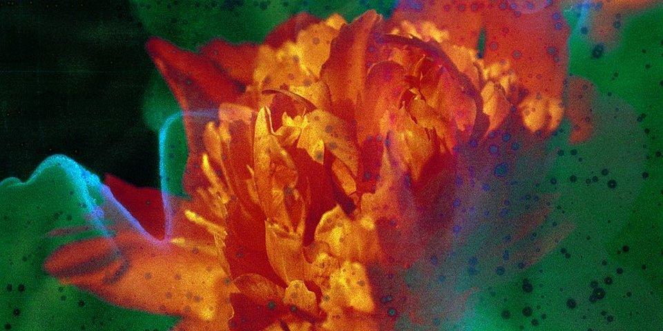 knallbunte Blüte
