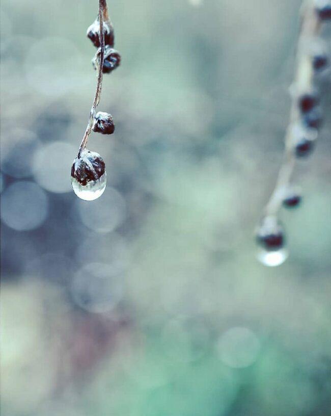 Wassertropfen an einer Pflanze