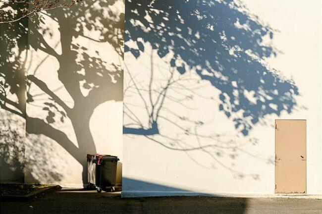 Schatten eines Baumes auf Fassade