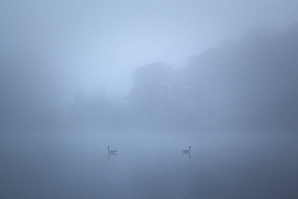 zwei Wasservögel auf einem See