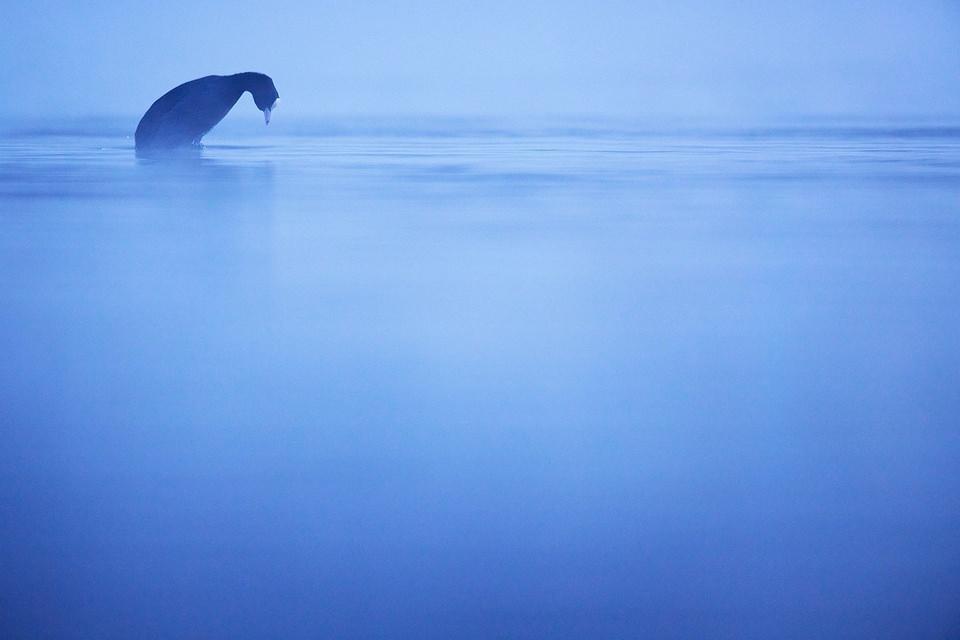 Vogel am Wasser im Nebel