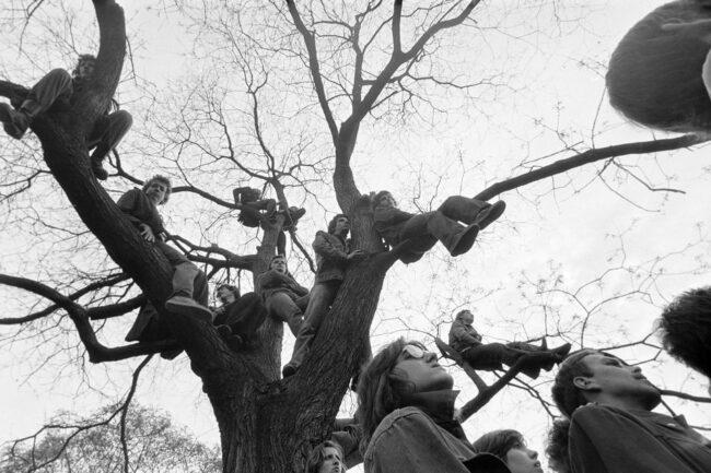 Menschen sitzen in einem Baum