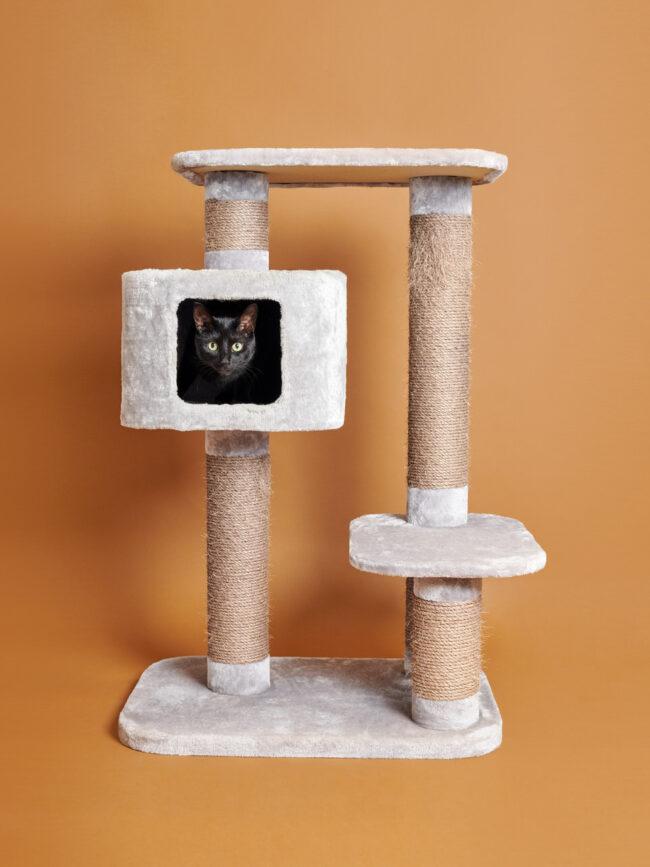Katze in einer Kratzbaumhöhle