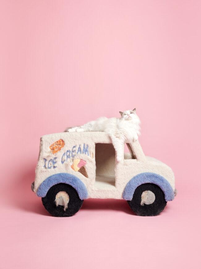 Katze auf einem Kratzbaumauto