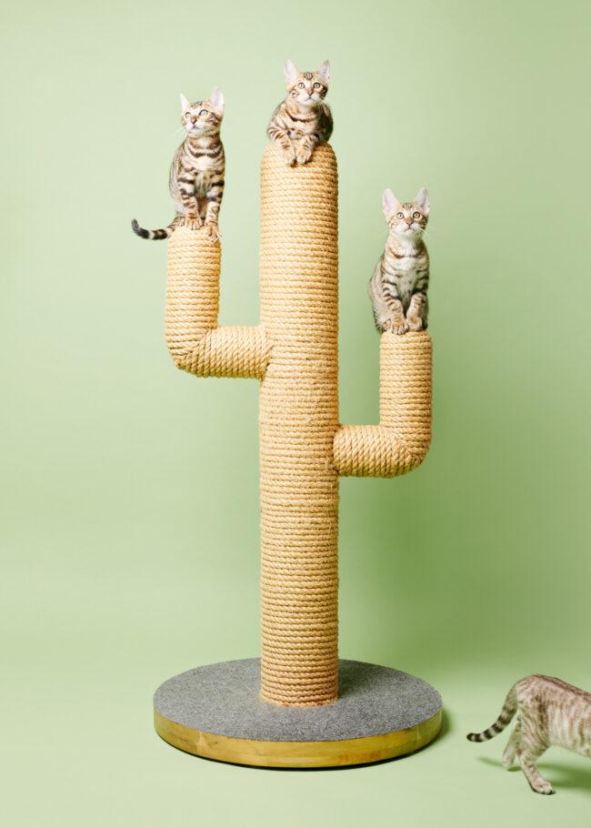 drei Katzen auf einem Kratzbaum und eine die aus dem Bild rennt