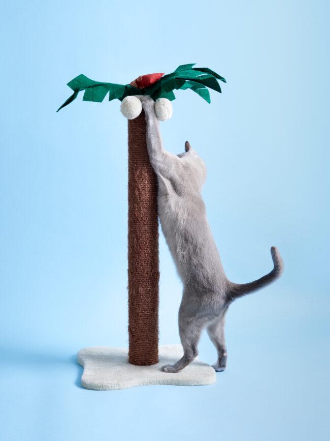 Katze an einer Kratzbaumpalme