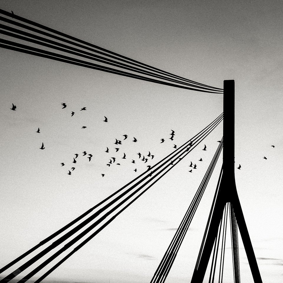 Brückenpfeiler mit Stahlseilen und fliegenden Vögeln