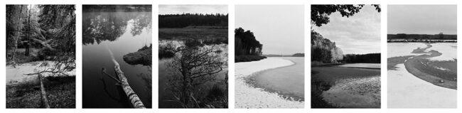 Collage aus Waldbildern