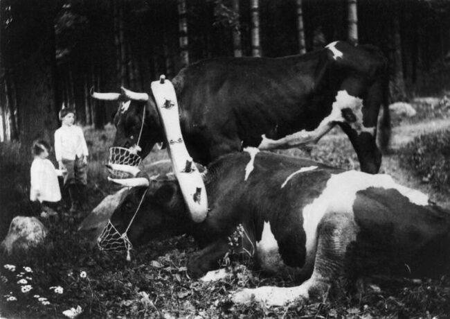 zwei Rinder und zwei Kinder