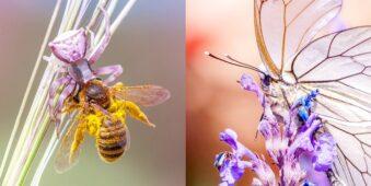 Diptychon Spinne mit Biene und Schmetterling