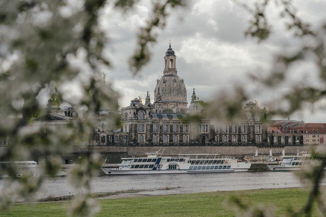 Blick durch Blüten auf einen Fluss und Gebäude