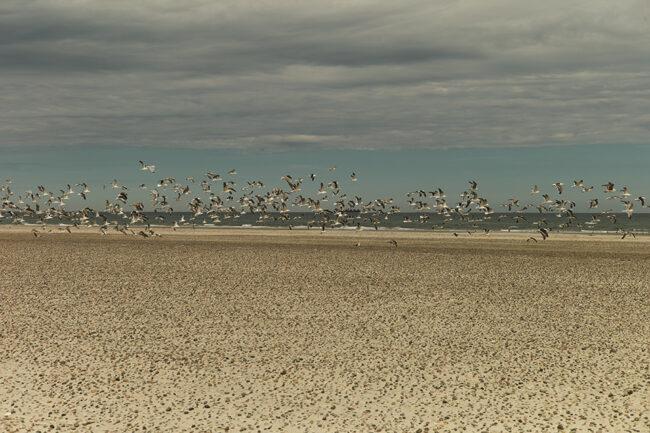 Strand mit Vögeln