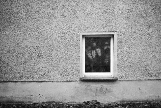 Fenster mit Pflanze in Fassade