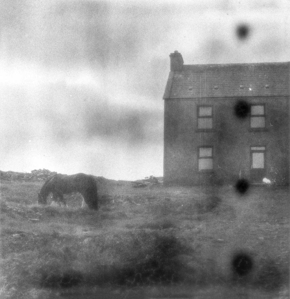 Pferd grast vor Haus auf einem Feld