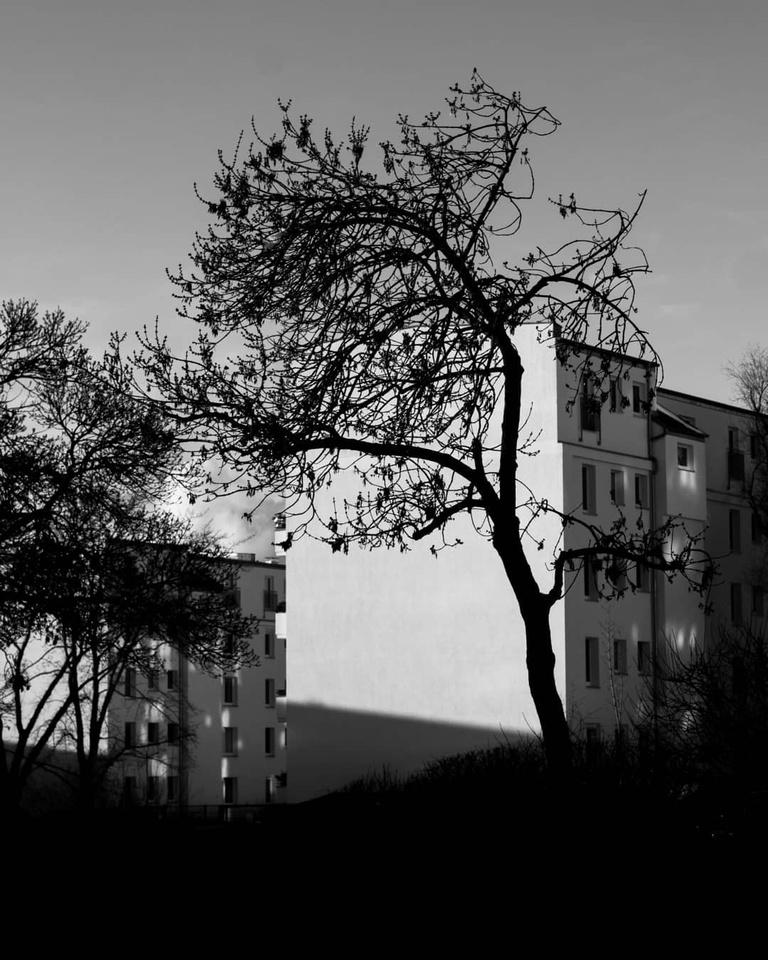 Baum vor Häuserblock