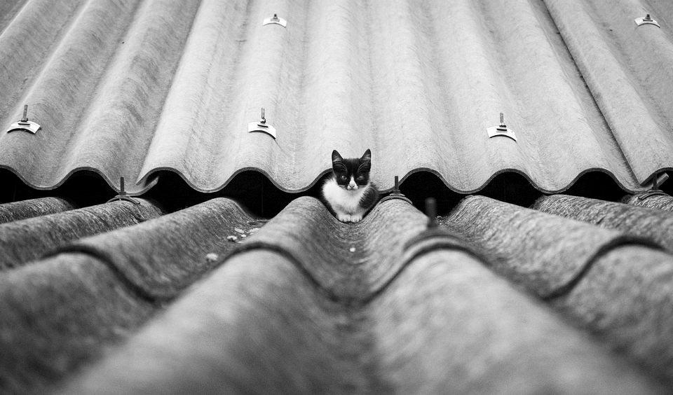 Katze auf einem Dach