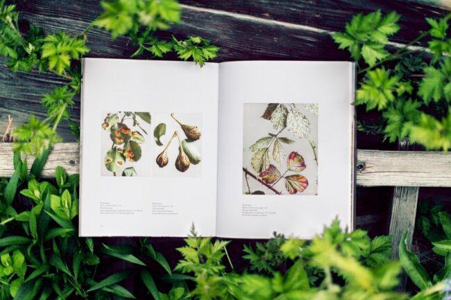aufgeschlagenes Buch im Grünen
