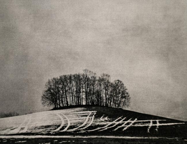 Baumgruppe auf einem Hügel