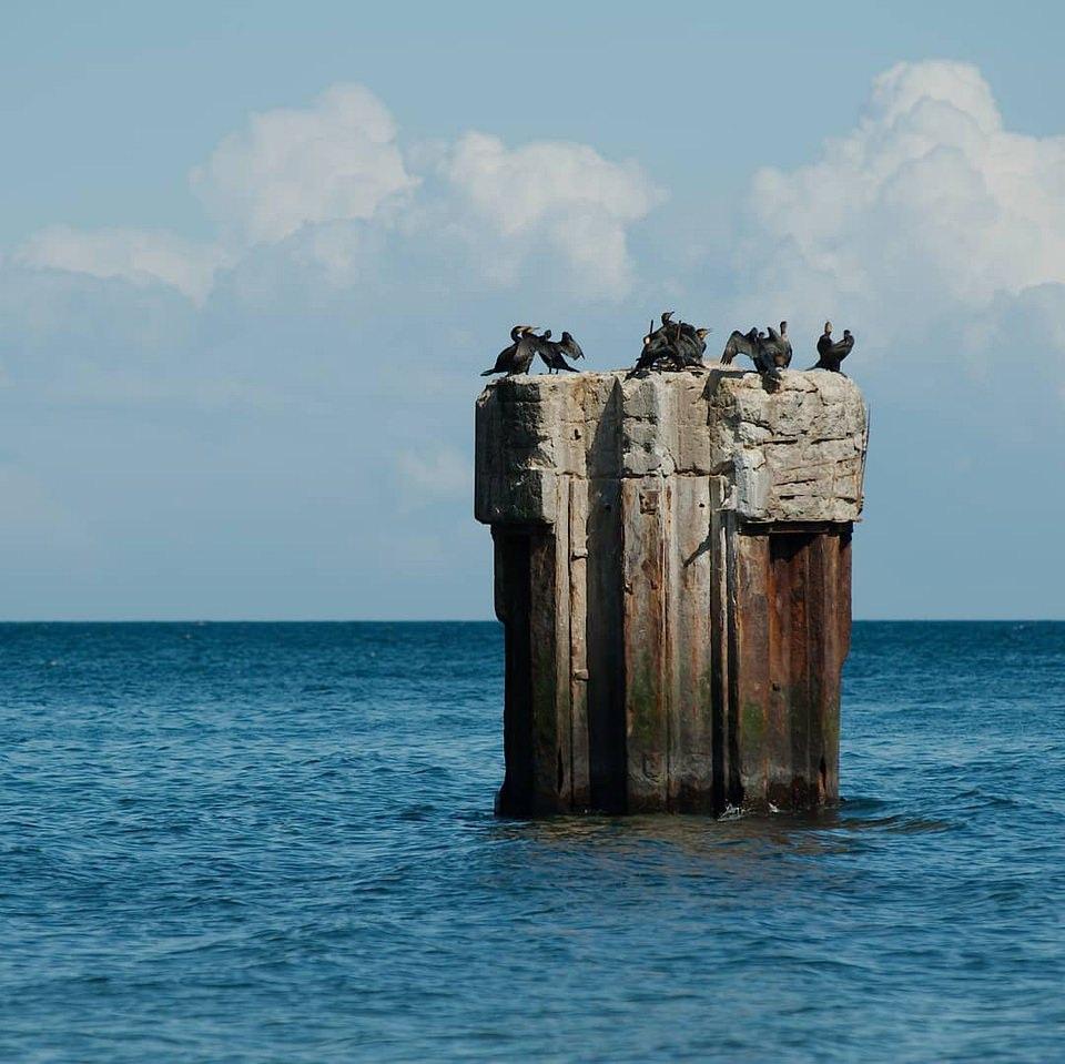 Vögel auf einem Felsen im Wasser