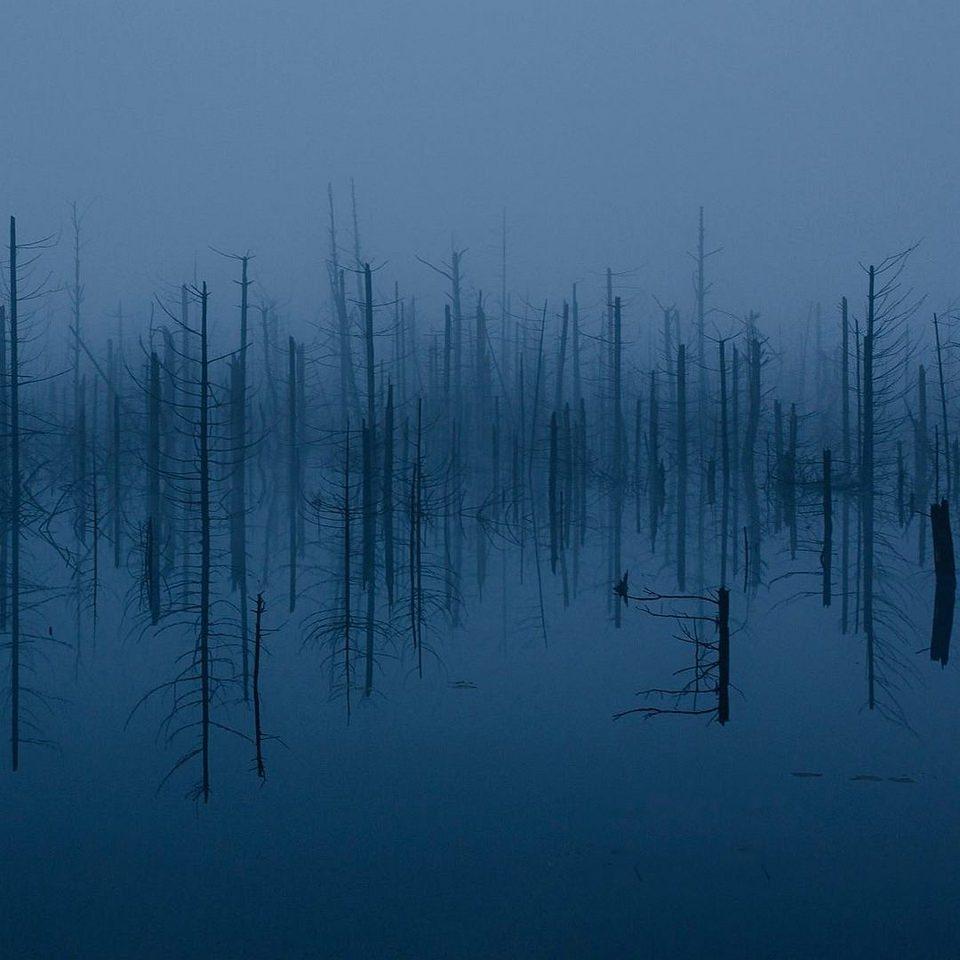 kahle Bäume ragen aus Wasser auf