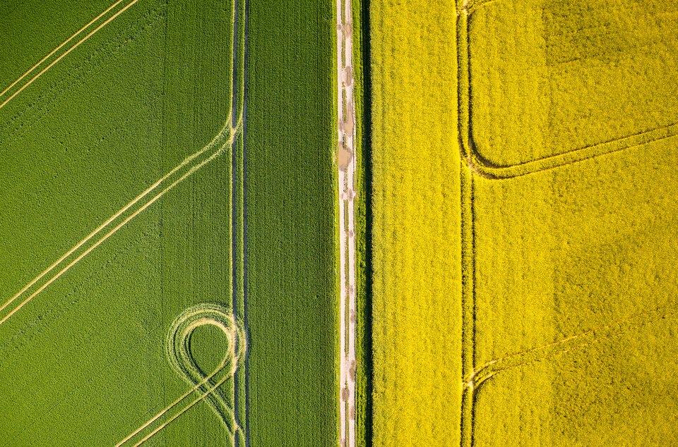 grünes und gelbes Feld
