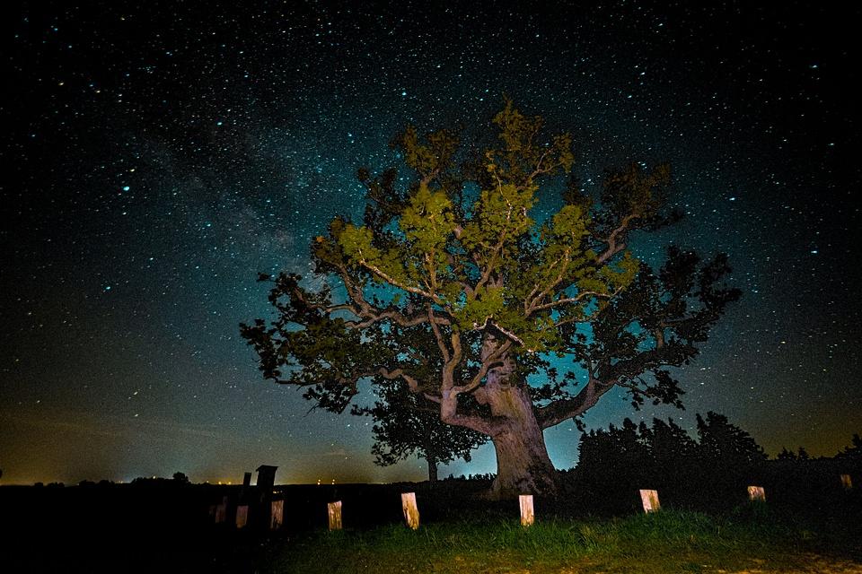 angestrahlter Baum nachts