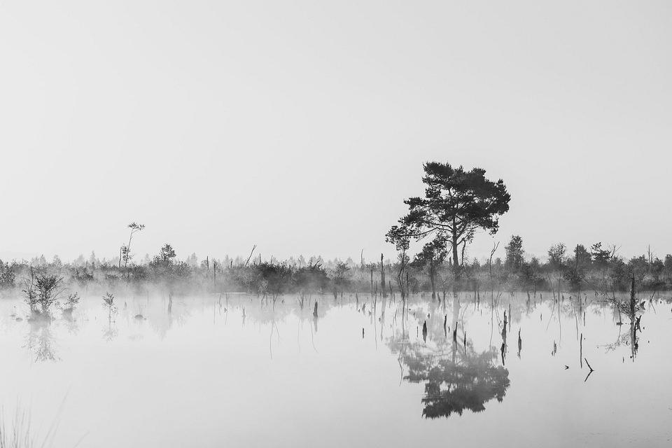 Sumpfland im Nebel
