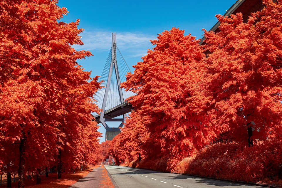 Brücke und rote Bäume