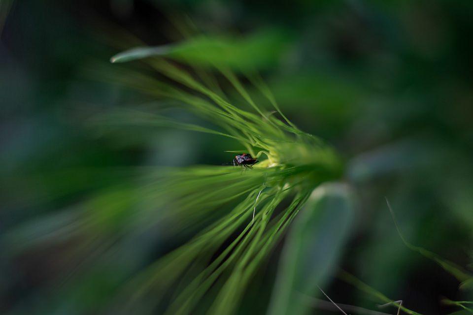 Käfer im Grünen