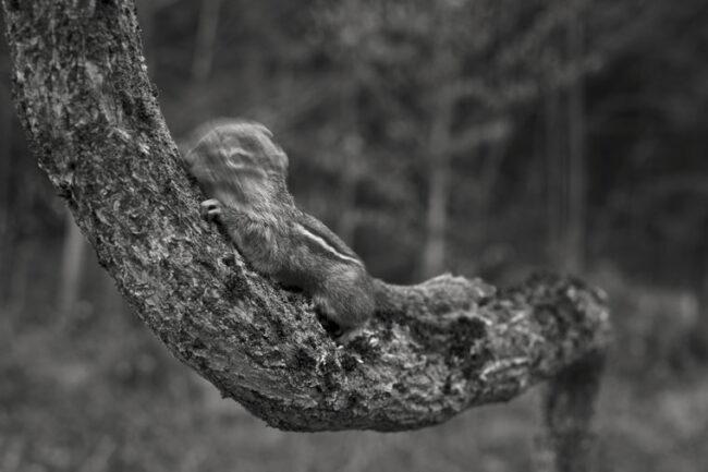 Hörnchen auf einem Ast