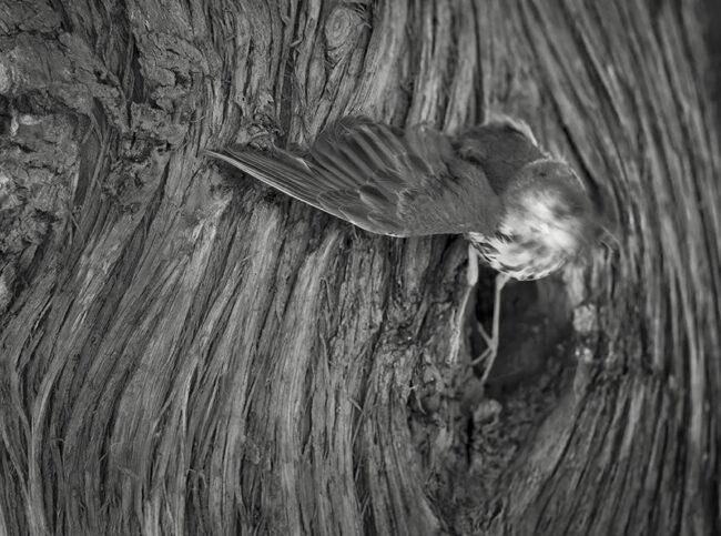 Vogel an einem Baum