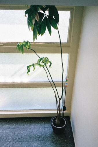 Zimmerpflanze am Fenster