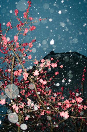 rote Blüten im Schneefall